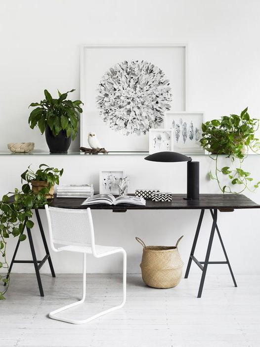 The Best Plants to De Stress Your Desk
