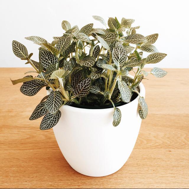 the best plants to de stress your desk mydomaine au