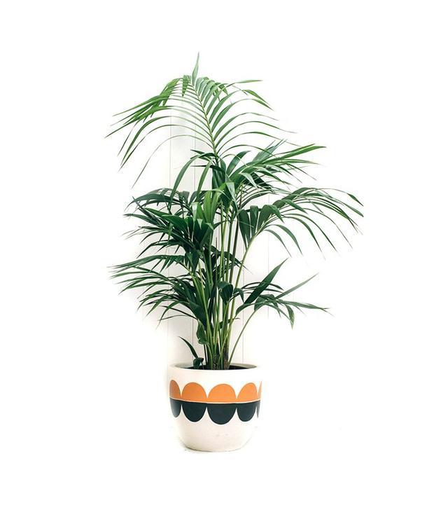modern plant pot