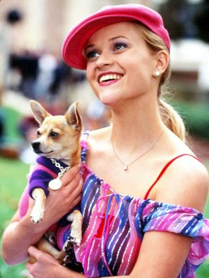 Legally Blonde Turns 15! See Reese Witherspoon's Perfect Tribute