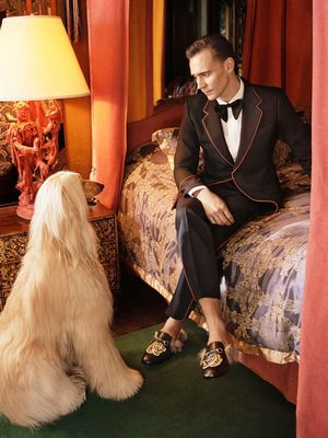 You Need to See Tom Hiddleston's Glorious Gucci Ads