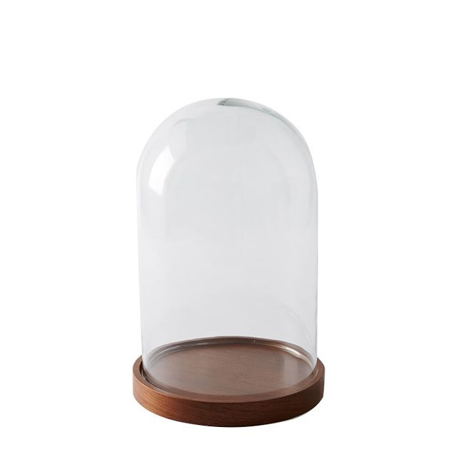 Display Cloche