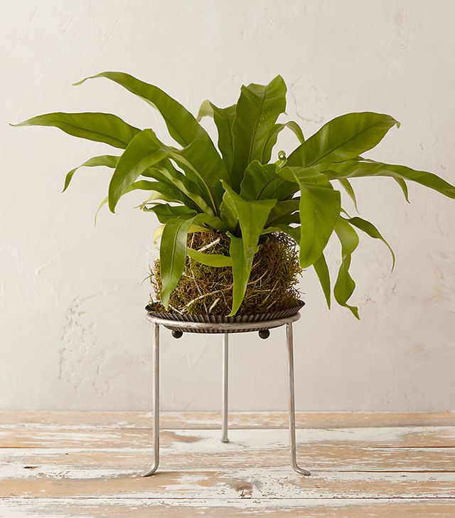Looking to Purify Your Home? These Are the Best Indoor Plants