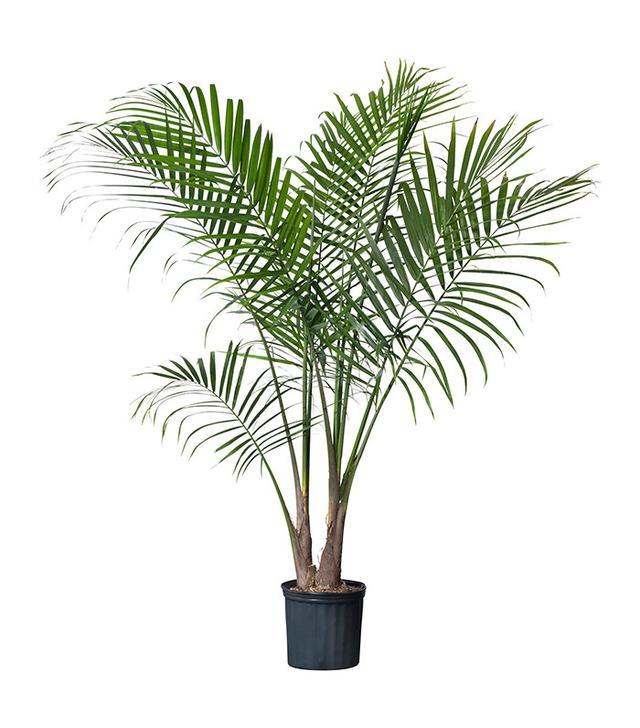 best purifying indoor plants