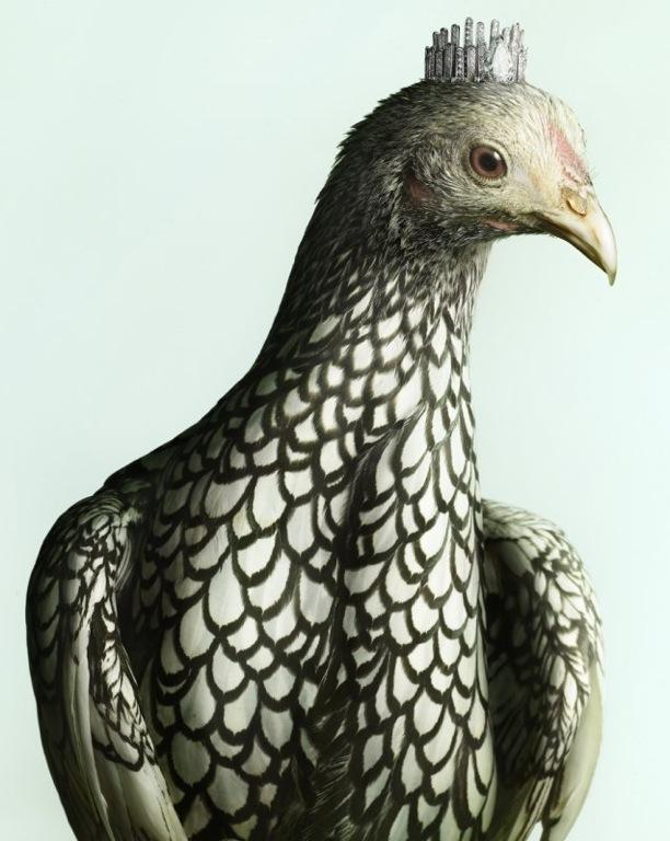 Luxury Chicks   Peter Lippmann