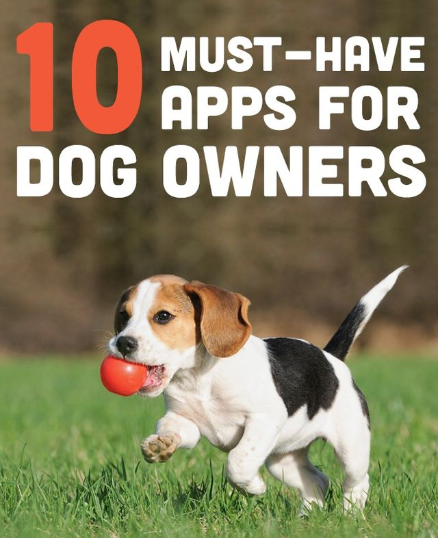 10 Must-Have Apps for Dog Owners