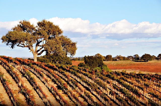 Paso Robles, from Los Angeles