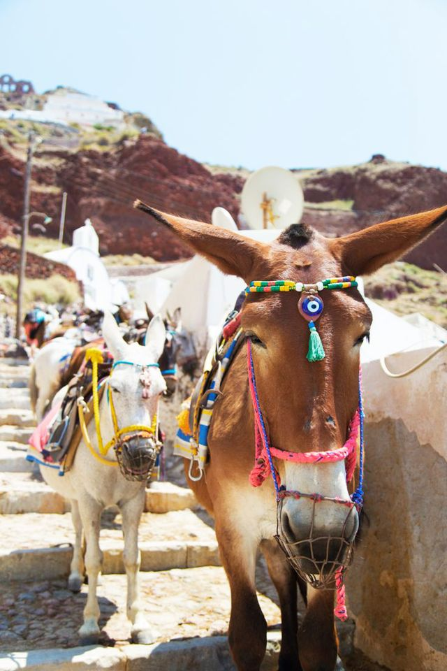 Have you ever seen donkeys so well accessorized? These beautiful inhabitants of Santorini might rival even the photogenic city itself.