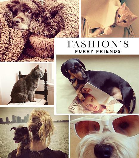 Petstagram! 42 of the Fashion World's Cutest Pets