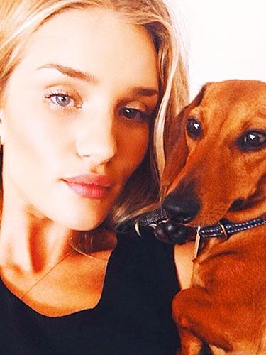 Rosie Huntington-Whiteley's Cute Dog, And 30 Top Celeb Instagrams
