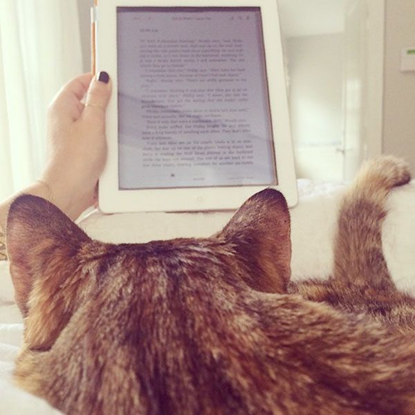 15. You lounge around reading books with your cat a lot, and you think that's a total social media-worthy activity.